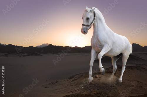White horse and the sunset in the desert