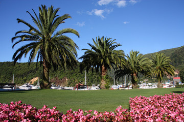 Palm trees and flowers in Picton, New Zealand