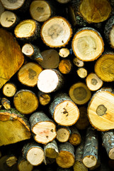 stack of logs that are different sizes