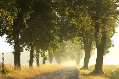 Fototapeta Rural road in the morning leading to misty forest