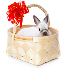 White rabbit in basket