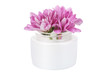 flowers in cosmetic bottle isolated