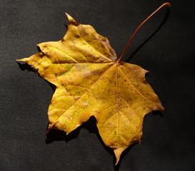 jesienny liść
