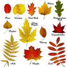 Autumn leaves -3 zbiórki