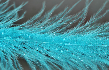 feathers with rain drops macro
