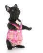 dog wearing pink dress