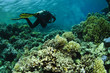 scuba diver on pristine coral reef