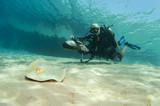 diver on underwater scooter with sting ray poster