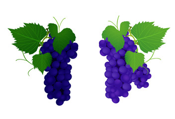 grapes, vector illustration
