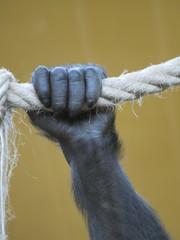 Mano de gorila