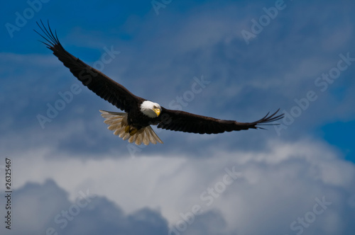 Eagle Bald eagle soaring