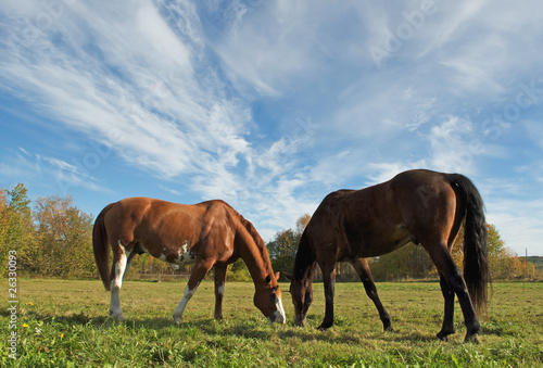 horses  on sky background