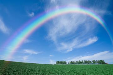 立ち木の丘と雲と虹