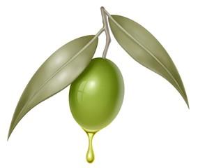 oliva foglie e olio