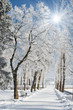 winter - 26336467