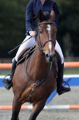 le cheval et son cavalier