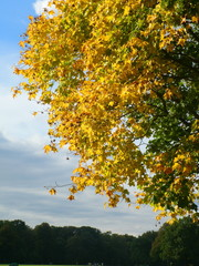 Oktober-Baum
