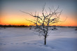 Beautiful winter sunset with a tree in the snow
