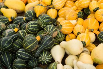 pumpkins gourds and squash