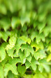 A sharp Tilt-photo of Background of green leaves