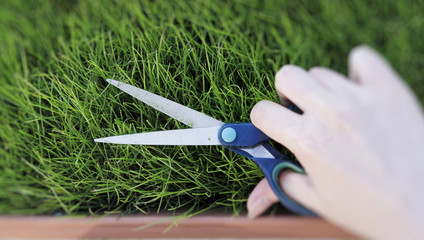Cutting fresh grass with a pair of scissors