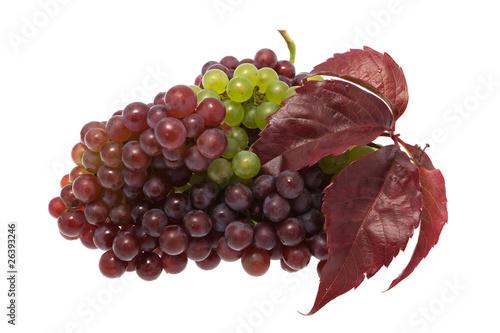 Weintrauben mit Blatt