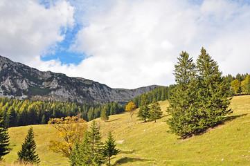almwiese in den bergen