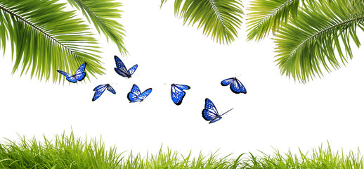 Magnifiques papillons exotiques bleus dans un écrin de verdure