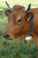 vache des montagnes avec sa cloche