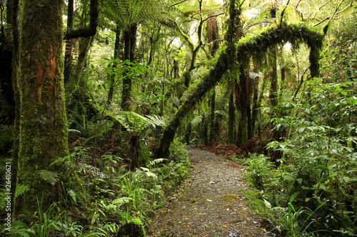 fototapete urwald forests wald pixteria. Black Bedroom Furniture Sets. Home Design Ideas