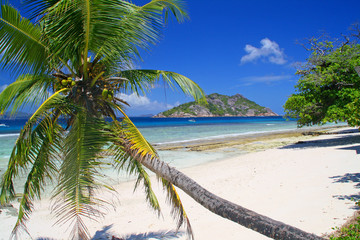 Palm tree on empty beach, Grand Soer island, Seychelles