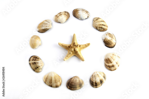 sea shell and sea star