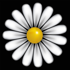 White daisy background, vector
