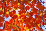 autumn miracle