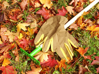 leaves, rakes and gardening gloves