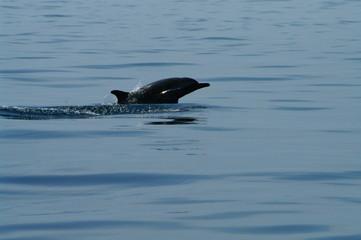 Dauphin Mayotte 2