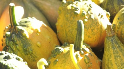 Pumpkins on the table; Nikon D3S, HD: Photo JPEG.