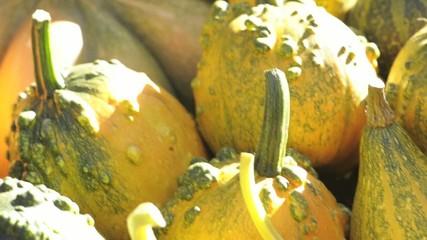Pumpkins on the table; Nikon D3S, HD: Photo JPEG.
