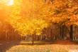 Beautiful sunny yellow autumn aprk landscape