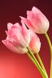 roleta: flower