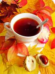 cup of tea autumn still life from colored leaves