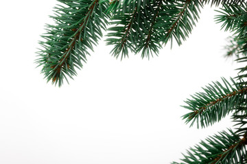 Pine Sprig for Christmas