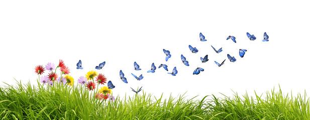 Magnifiques papillons bleus butinant des fleurs des champs