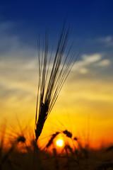 golden sunset over harvest field