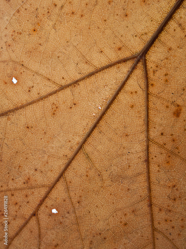 Texture of dying leaf