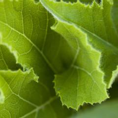 nervures végétales de feuille verte