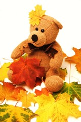 Teddy zwischen Herbstblättern