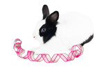 rabbit with pink ribbon isolated on white