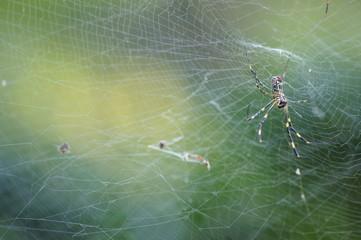 クモの巣と緑