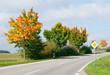Straße im Herbst - Street in Autumn
